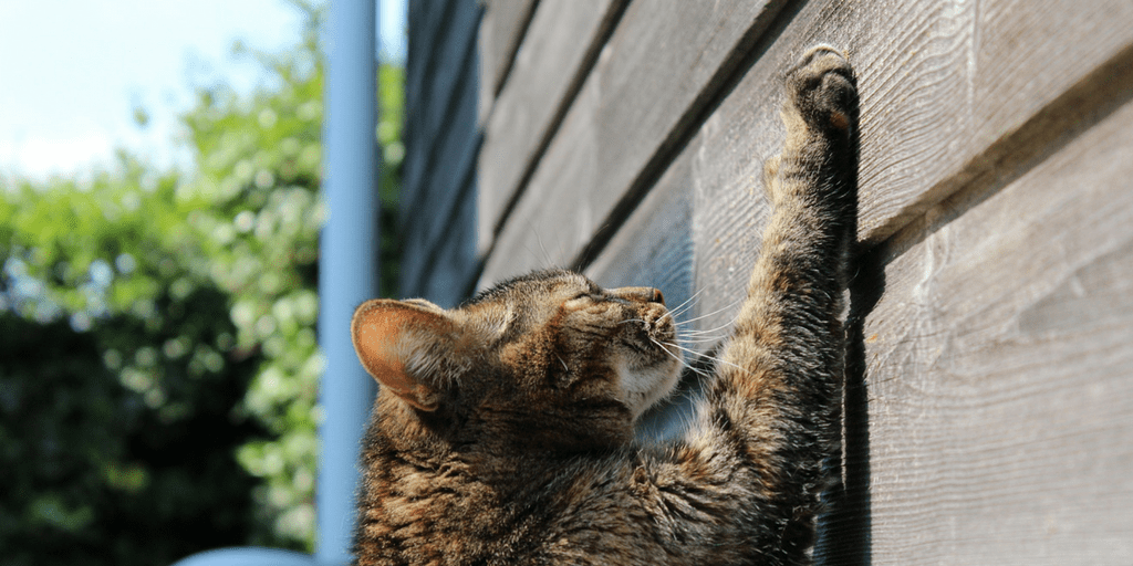 How to stop your cat from scratching furniture?