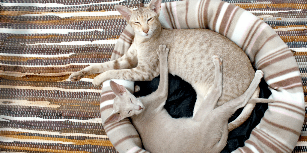 Keep peace in a multi-cat home graphic