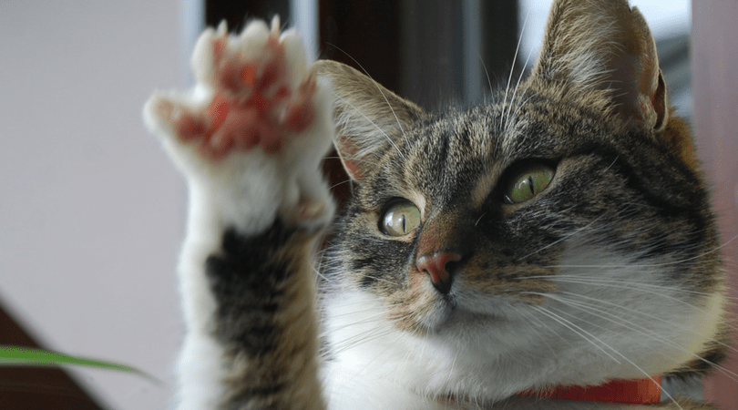 How To Trim A Cats Claws graphic