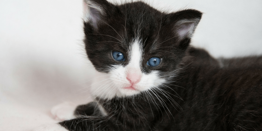Cat Naming Guide- How to name your new furbaby graphic